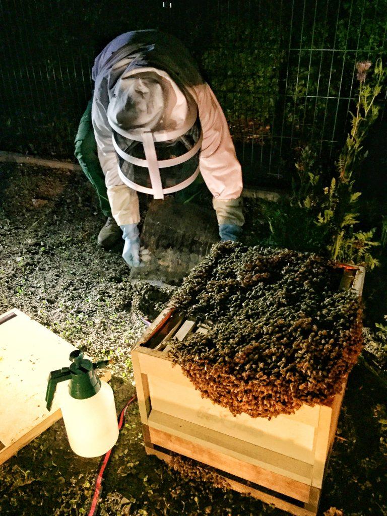 Beeindruckender Bienen-Berg auf der mitgebrachten Holzzarge