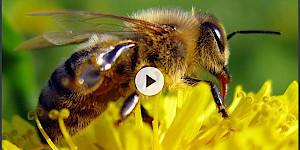 Bushaltestellen als Oasen für Insekten