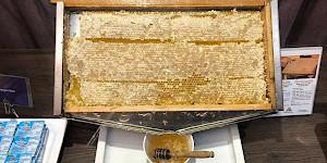 Honigwabe auf dem Frühstücksbuffet