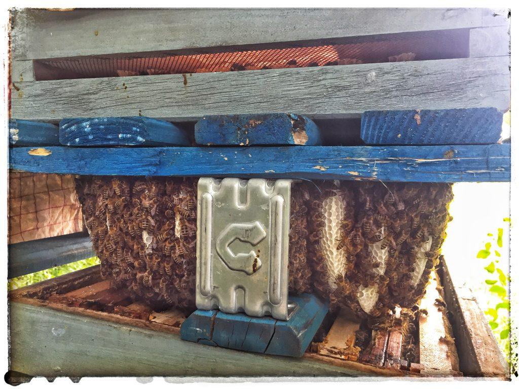 Untergrundbienen im Souterrain