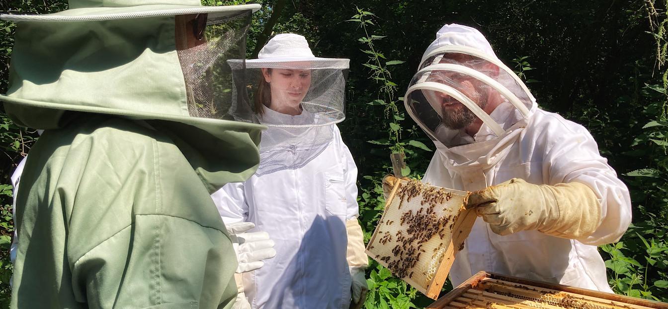 Toto beim Bienen-Coaching am Haus St. Georg im Juli 2021