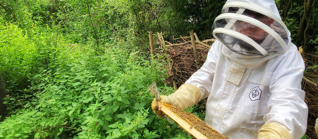 Toto ... the beekeeper bei seinen Bienen